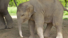 A shot of a Baby Elephant in Nepal Stock Footage