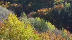 beautiful autumn landscape with colorful trees in yellow and red tones - stock footage