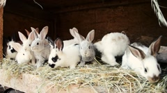 A group of small young rabbits in shed. Easter symbol Stock Footage