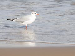 Beautiful bird gull went to sea Stock Photos