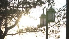 Street lamps, lanterns, trees, China Stock Footage