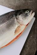 Fresh sea trout Stock Photos