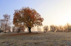 Autumn to winter Stock Photos