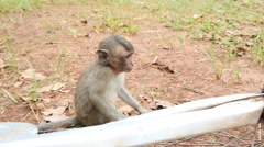 4k monkeys wildlife free animals outdoors baby primate ape - stock footage