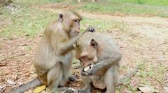 4k monkeys wildlife free animals outdoors care primate ape - stock footage