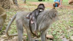 4k monkeys wildlife free animals outdoors care primate ape - stock footage