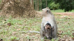 4k monkeys wildlife free animals outdoors care baby ape - stock footage