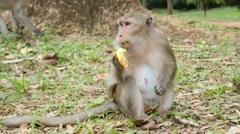 4k monkeys wildlife free animals outdoors eating banana Stock Footage