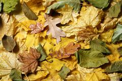 Variety of autumn fallen leaves close up Stock Photos