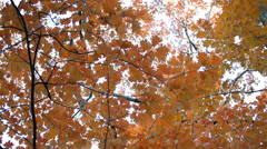 Close-up on beautiful autumn fall leaves blow in a wooded parking lot. Seasonal. Stock Footage