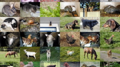 Slide show animals seamless loop Stock Footage
