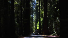RV on scenic road, Redwood Forest Stock Footage