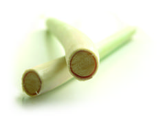 lemon grass stem - stock photo
