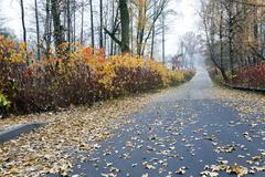 Stock Photo of the autumn season