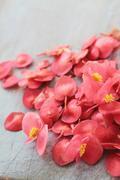 edible apple blossom - stock photo