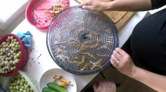 Placing chanterelles mushrooms on a vegetable dryer Stock Footage