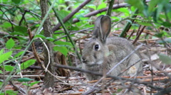 Rabbit in the grass Stock Footage