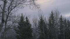 4k Beautiful Light Snow Falling With Trees Woodland Forest In Winter Stock Footage