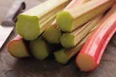 cut English rhubarb stem - stock photo
