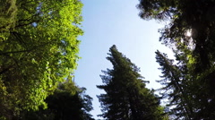 Redwood National Park POV drive Stock Footage