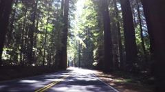 POV drive, Redwood National Park Stock Footage