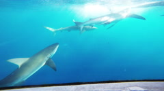 Shark Cage in Hawaii, POV Stock Footage