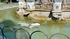 Dog swimming Stock Footage