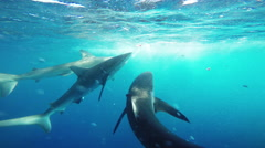 Shark Cage in Hawaii, POV - stock footage