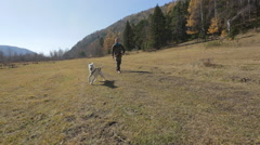 Adult man walking a dog on a treadmill harness on the meadow, in the mountains Stock Footage