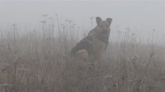 Dog in the Fog Stock Footage