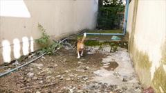Beagle play around the house Stock Footage