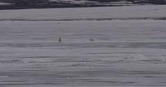Polar Bear Cub Walks Towards Mother On Sheet of Ice Stock Footage