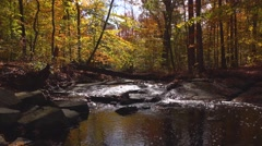 Stream Surrounded By Autumn Leaves Nature Sounds Stock Footage