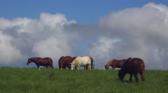 4K Horses Graze Birds Heads Pop Up In Green Meadow Stock Footage