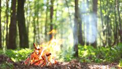 The fire is burning in the forest. Nature background. - stock footage