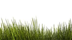 Tall grass close up Stock Illustration