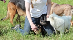 Dog trainer feeds the dogs Stock Footage