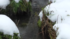 Small streamlet in  wood Stock Footage