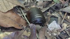 Pill Bug walk on forest floor Stock Footage