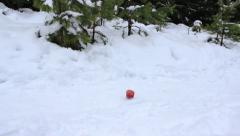 Red apple is rolling in the snow in the forest Stock Footage