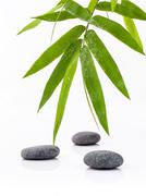 The Stones spa treatment scene and bamboo leaves with raindrop zen like conce Stock Photos