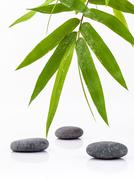 The  Stones spa treatment scene and bamboo leaves with raindrop zen like conc Stock Photos
