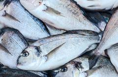 Fresh fish on market tray Stock Photos