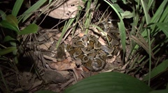 Reticulated Python moving on ground in the night Stock Footage