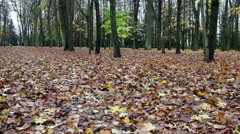 Autumn bright leaves cover the ground Stock Footage