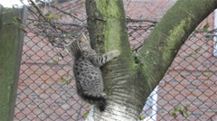 Cat climbs a tree Stock Footage