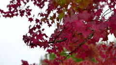One side of leaves blown by gentle breeze in the park Stock Footage