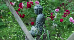 BUDDHA STATUE IN ROSE GARDEN - stock footage