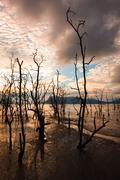 Dead trees and muddy beach at sunset Stock Photos
