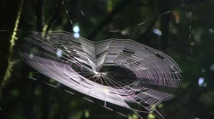 Spider weaving web 1 - stock footage
